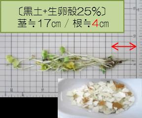 黒土+生卵殻25%