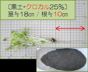 黒土+クロカル25%